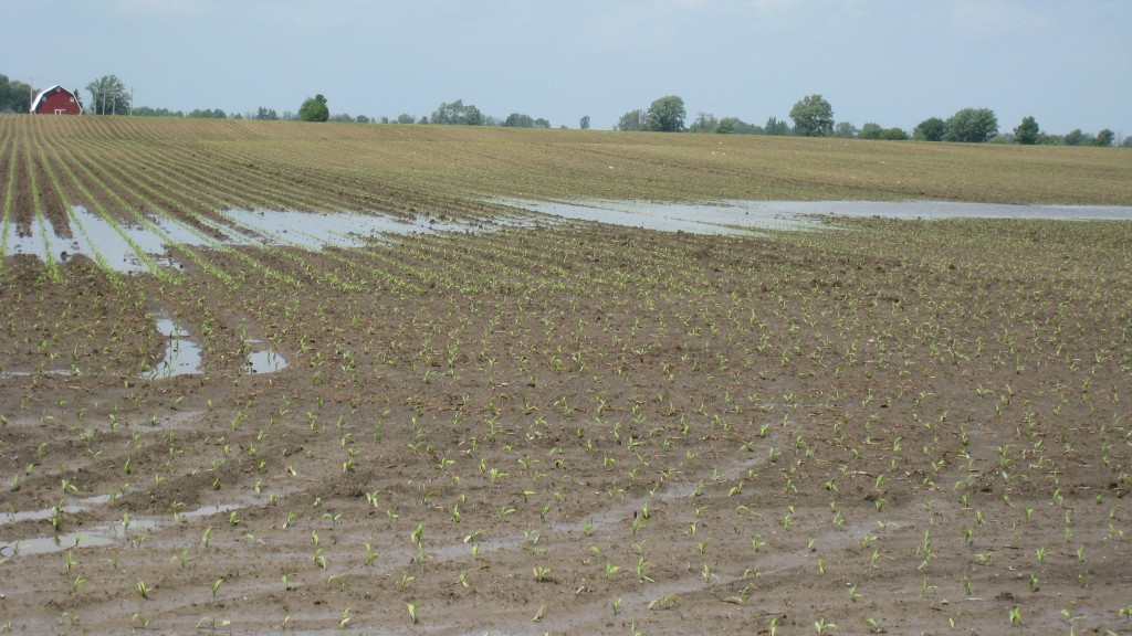 Concerns over heavy spring rains prompts Michigan corn growers to split N-applications throughout growing season.