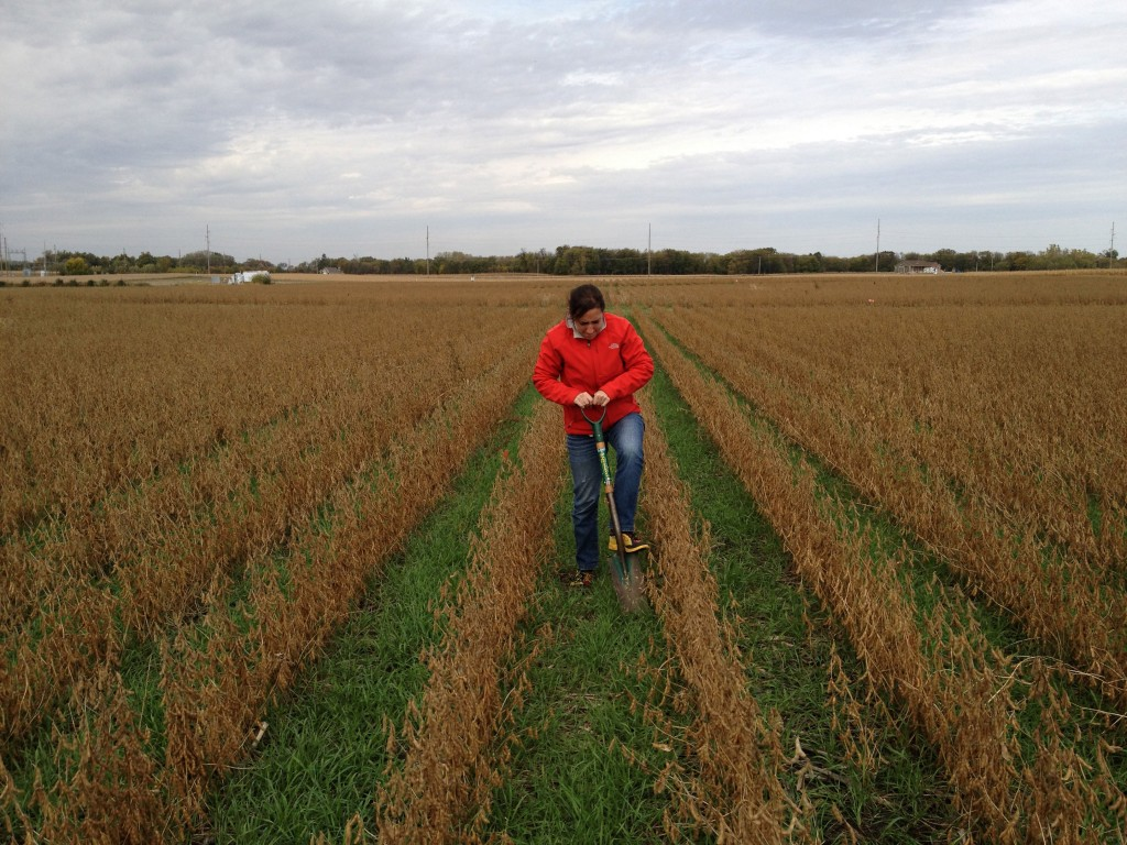 Cover Crop Soil Sampling